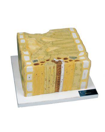 مدل برگ کد ۳۷۰۰۳