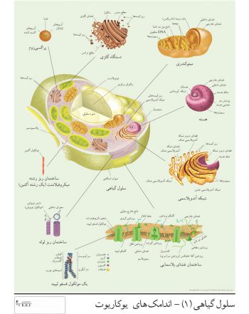 پوسترآموزشی (چارت) سلول گیاهی(۱)-اندامکهای یوکاریوت