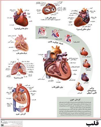 پوستر آموزشی قلب