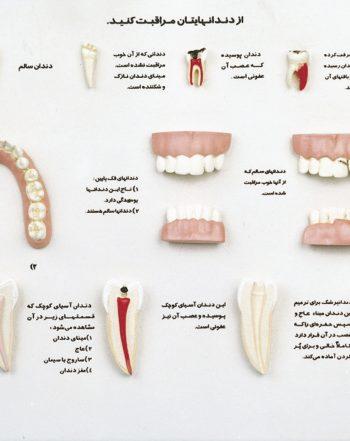 مدل مراقب دندان های خود باشید
