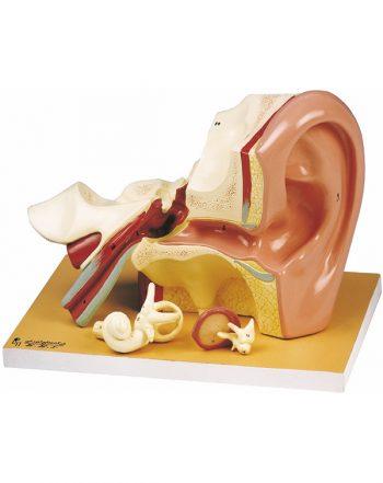 مدل گوش ۴ تکه