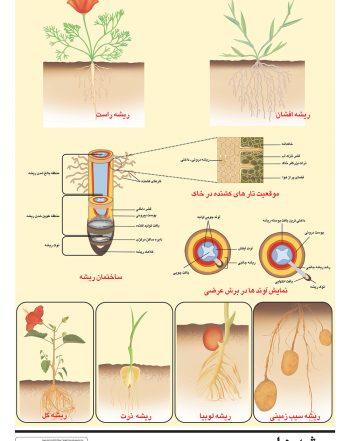 پوستر آموزشی انواع ریشه های گیاهان مختلف