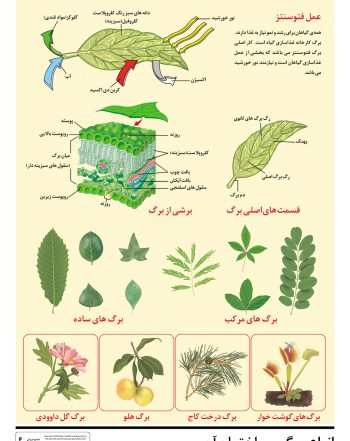 پوستر آموزشی برگ در گیاهان مختلف