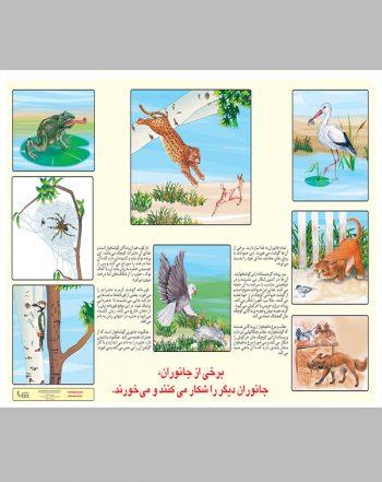 پوستر آموزشی برخی از جانوران، جانوران دیگر را شکار می کنند