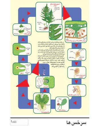 پوستر آموزشی (چارت) سرخس لمینت شده