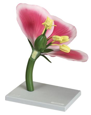 مدل ساختمان گل