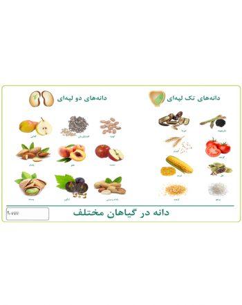 چارت دانه در گیاهان مختلف
